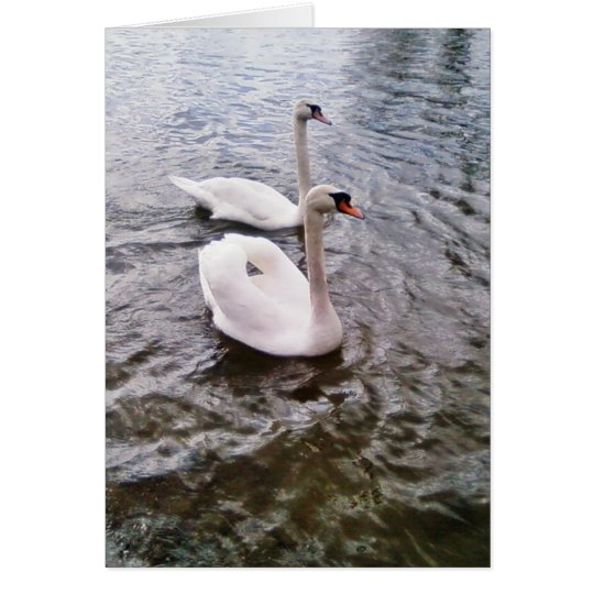 Danube Birds Swans Card
