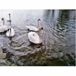 Danube Birds Swans Photo Cutout