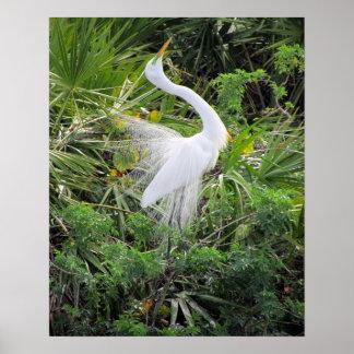 Danza de acoplamiento del gran Egret blanco Impresiones