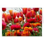Danza de la amapola del tulipán felicitación