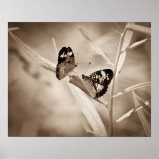 Danza de la mariposa poster