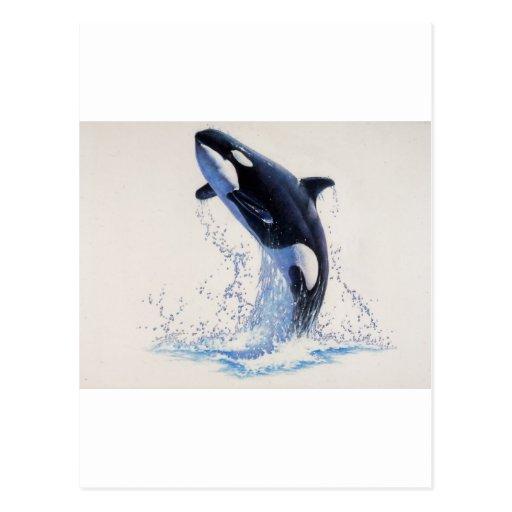 Danza de la orca tarjetas postales