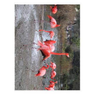 danza del flamenco postales