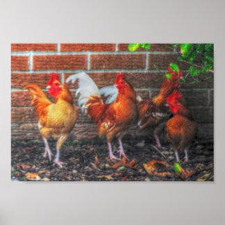 Danza del pollo impresiones