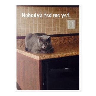 Daphne melodramático el gato - postal -