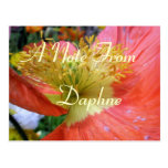 Daphne Post Cards