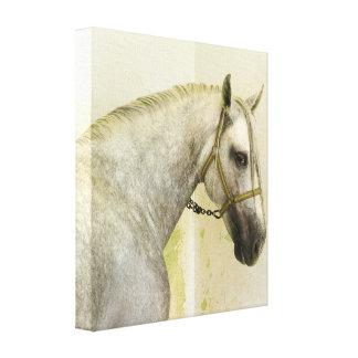 Dapple el caballo andaluz gris impresion en lona