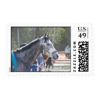 Dapple el caballo gris sellos