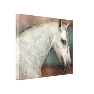 Dapple Gray Andalusian Horse Portrait Canvas Print