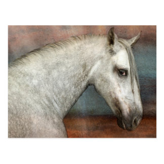 Dapple Gray Andalusian Horse Portrait Postcard