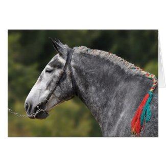 Dapple grey horse birthday greeting card