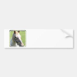 Dappled Appaloosa Horse Bumper Stickers