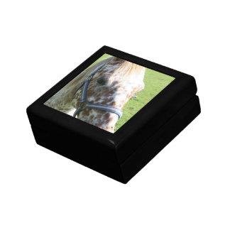 Dappled Appaloosa Horse Gift Box