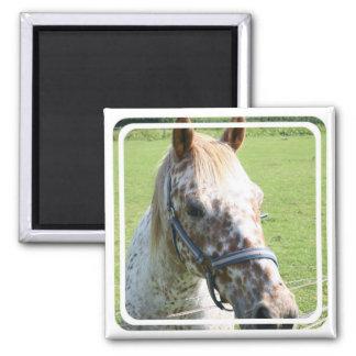 Dappled Appaloosa Horse Magnet Refrigerator Magnet