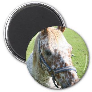 Dappled Appaloosa Horse Magnet Magnet