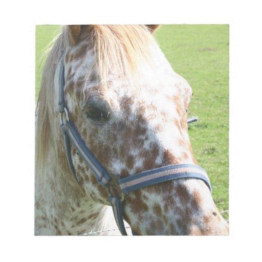 Dappled Appaloosa Horse Notepad