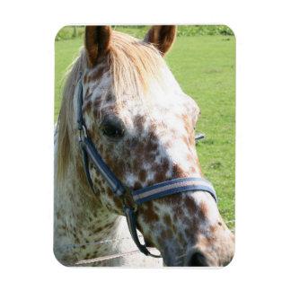 Dappled Appaloosa Horse Premium Magnet Vinyl Magnets