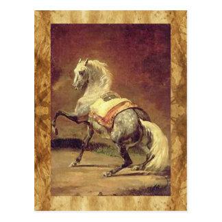 DAPPLED GREY HORSE POSTCARD