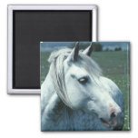 Dappled Grey in Flowered Pasture 2 Inch Square Magnet