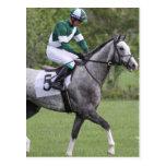 Dappled Grey Race Horse Postcards