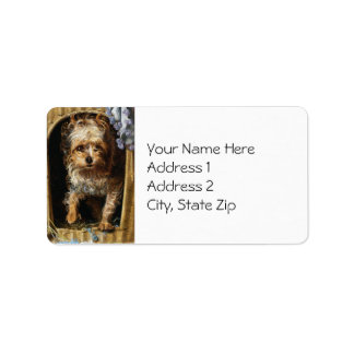 Darby una impresión de Yorkshire Terrier Etiqueta De Dirección