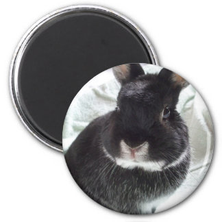 Darcy Close-up 2 Inch Round Magnet