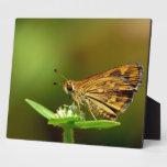 Dardo de la hierba del Tamil de la mariposa con el Placa De Plastico