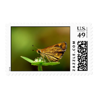 Dardo de la hierba del Tamil de la mariposa con el Franqueo