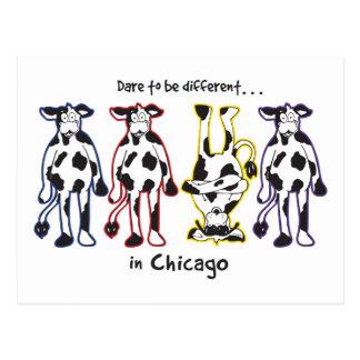 DARE-CHICAGO POSTCARD