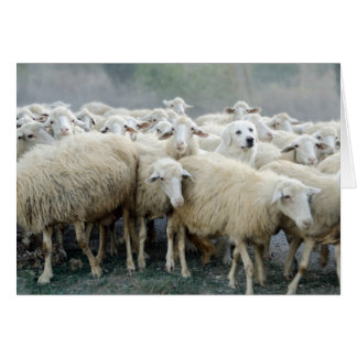 Dare to be different! Sheepdog Saying ... Card