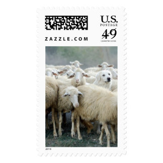 Dare to be different! Sheepdog Saying ... Postage Stamp