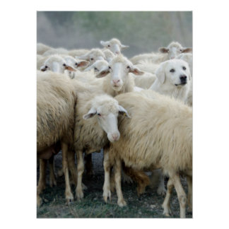 Dare to be different! Sheepdog Saying ... Poster