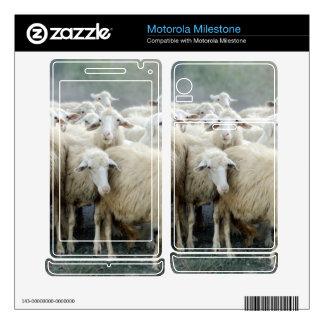 Dare to be different Sheepdog Saying Motorola Milestone Decals