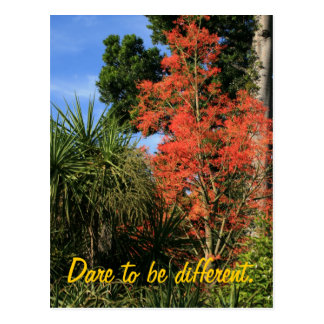 Dare to be Different - Show off your true colors Postcard