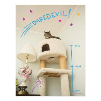 Daredevil Cat Postcard