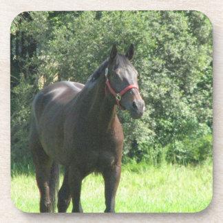 Dark Bay Horse Cork Coasters