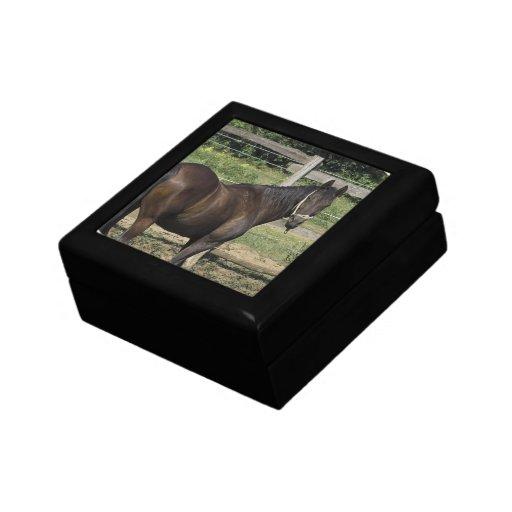 Dark Bay Horse  Gift Box