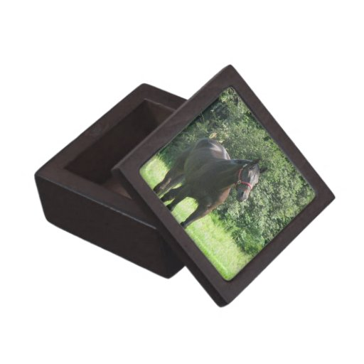 Dark Bay Horse Gift Box Premium Gift Boxes