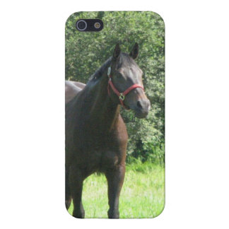 Dark Bay Horse iPhone 5 Cover