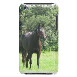 Dark Bay Horse iTouch Case iPod Touch Case-Mate Case