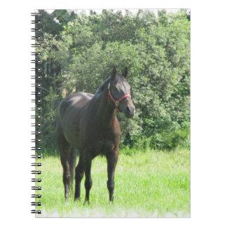 Dark Bay Horse Notebook