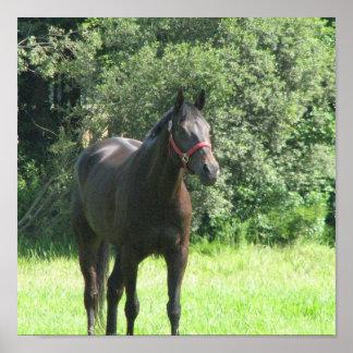 Dark Bay Horse Print