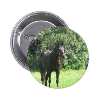 Dark Bay Horse Round Pin