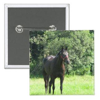 Dark Bay Horse Square Button