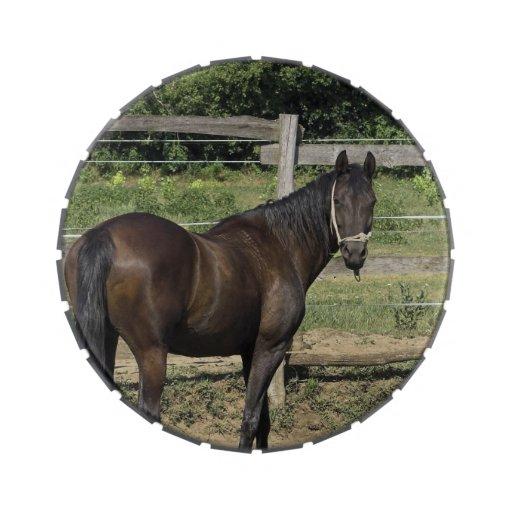 Dark Bay Thoroughbred Horse Candy Tin