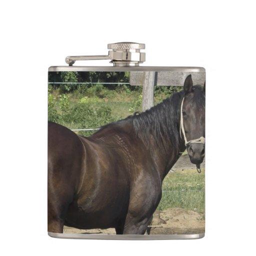 Dark Bay Thoroughbred Horse Flasks