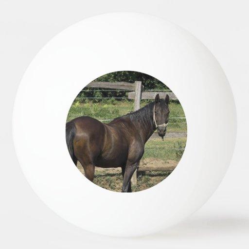 Dark Bay Thoroughbred Horse Ping-Pong Ball