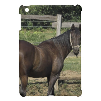 Dark Bay Thoroughbred Horse iPad Mini Cover
