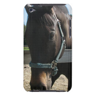 Dark Bay Thoroughbred Horse iTouch Case Barely There iPod Covers