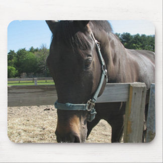 Dark Bay Thoroughbred Horse Mouse Pad